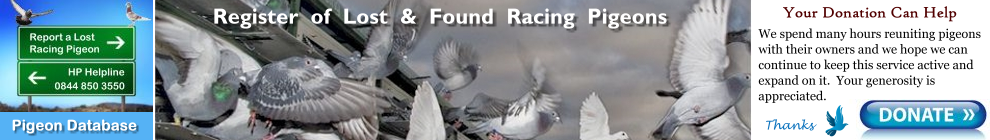 Report a Lost or Found Stray Racing Homing Pigeon