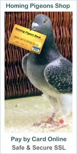 Safe and Secure On-Line Pigeon Shop